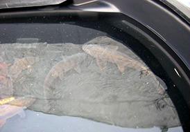 Electrofishing & Seine Netting